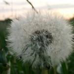 Beikost und Allergien